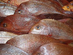 Fresh fish - Sydney Fish Markey
