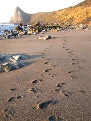 Insert Footprints Poem Here