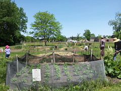 """Calvin Park Community Garden 10 • <a style=""""font-size:0.8em;"""" href=""""http://www.flickr.com/photos/61175668@N08/18722200208/"""" target=""""_blank"""">View on Flickr</a>"""