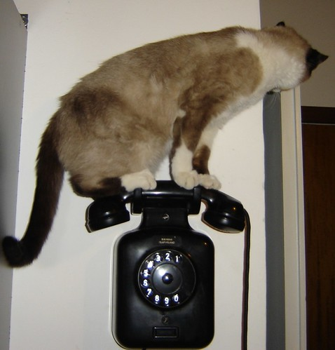 cat on a hot tin phone