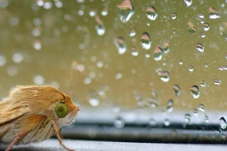 Déšť a moucha (?)
