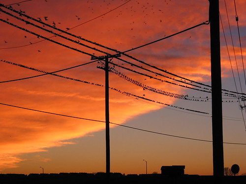 Birds on the wires