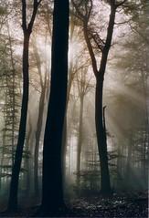 Hasbergen Wald im Herbst, Germany