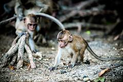 monkeys-1001