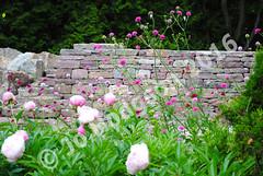 Jo-hodgson-stone-wall-1