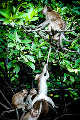 monkeys-1009