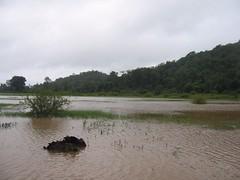 Kollibacchalu Dam -Malenadu Heavy Rain Effects Photography By Chinmaya M.Rao   (113)