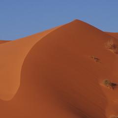 Saudi Dune