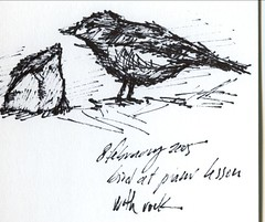 bird at piano lesson with rock