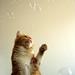 photo de Peach éclatant une bulle,
