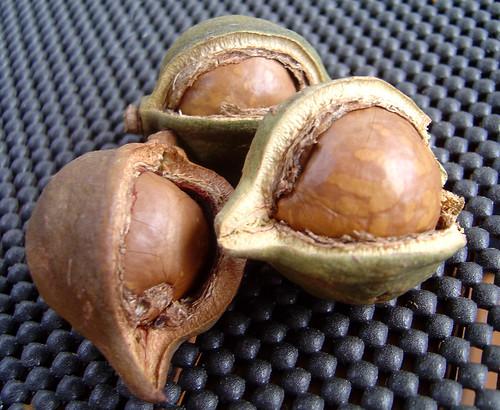 DSC01930 - Macadamia nuts