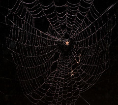 "CRW_4082: Spider Web • <a style=""font-size:0.8em;"" href=""http://www.flickr.com/photos/54494252@N00/9092642/"" target=""_blank"">View on Flickr</a>"