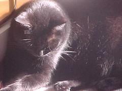 Ash in sunlight