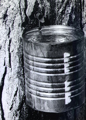 Bucket of Sap, photo by Allan L McFarlane