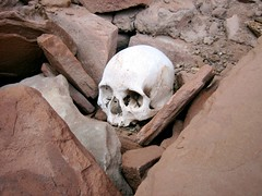 Human Skull In Canyon De Chelly