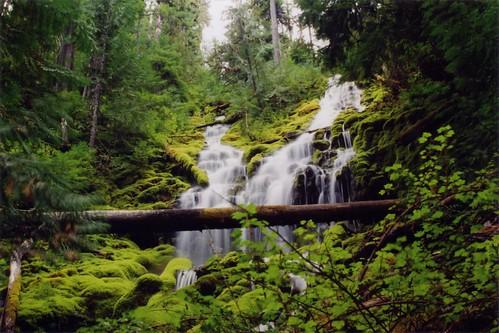 Upper Proxy Falls II (by bookgrl)
