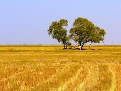 Image by Pandiyan