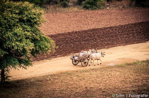 Bagan Farm Fields in Myanmar
