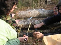 inoculating mushroom logs