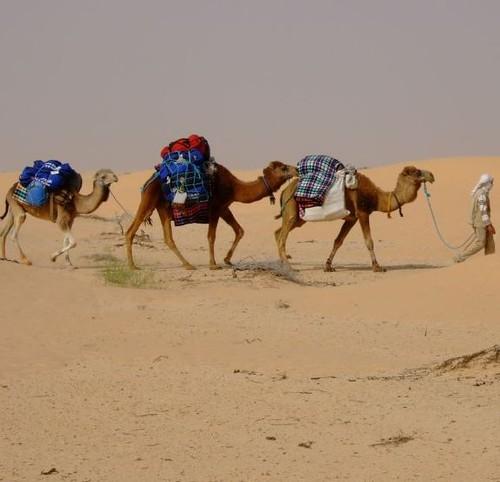 Tunisian Sahara Trek 2006