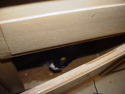 Joaquin Hiding