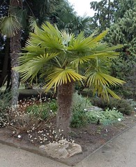 "Die Palme. Die Palmen • <a style=""font-size:0.8em;"" href=""http://www.flickr.com/photos/42554185@N00/19462977243/"" target=""_blank"">View on Flickr</a>"