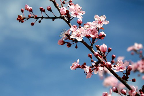 Spring signs by cuellar @Flickr.com