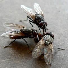 Parasites in Ranchi #2: Unauthorised Meeting