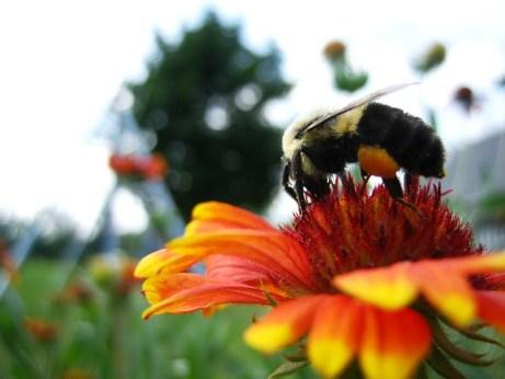 Return of the Bee