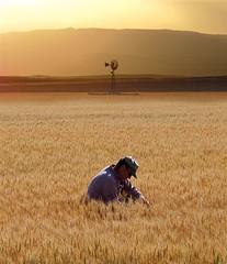 Losing To Gain, farmer