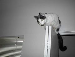On top of the laundry closet door