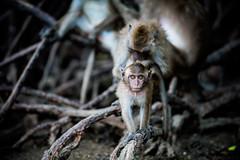 monkeys-1018