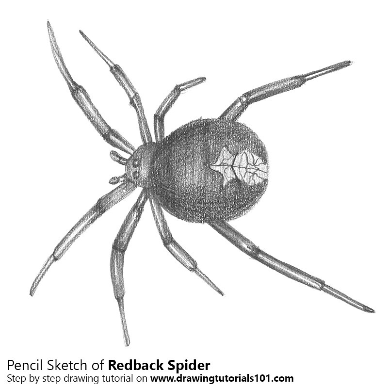 The World's most recently posted photos of redback and