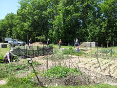 """Calvin Park Community Garden 6 • <a style=""""font-size:0.8em;"""" href=""""http://www.flickr.com/photos/61175668@N08/18722289470/"""" target=""""_blank"""">View on Flickr</a>"""