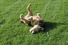 Argyle enjoying a roll