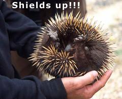 Shields up!!