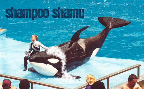 the original Shamu has been dead for over 40 years.