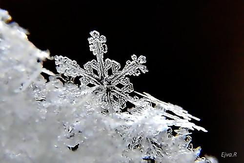 Snowflake / Hópihék