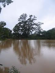 Kollibacchalu Dam -Malenadu Heavy Rain Effects Photography By Chinmaya M.Rao   (131)
