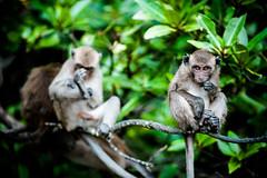 monkeys-1017