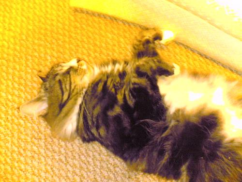 Dead cat impression