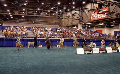 American Kennel Club Hounds
