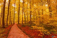Sanspareil im Herbst-12