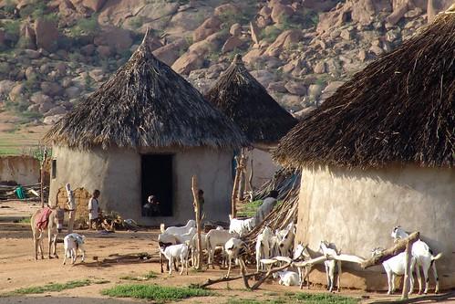 Village scene with goats - Gash Barka