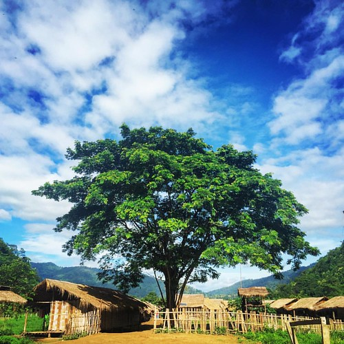 #bluesky and a #tree  @ Maetaeng #Elephant #Camp #Jungle #ChangMai #Thailand  #thailoup #traveloup