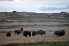American Prairie Reserve 23