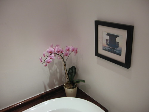 Orchids in the Bathroom by hardillb.