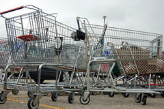 Herd of trolleys