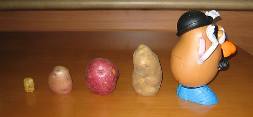 image of potatoes evolving into Mr. Potato Head