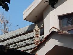 The Legend Kuchipudi Dancer Dr. Vyjayanthi Kashi's Shambhavi School of Dance Outside Photography By Chinmaya M.Rao  (274)